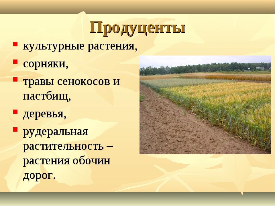 Продуценты культурные растения, сорняки, травы сенокосов и пастбищ, деревья,...