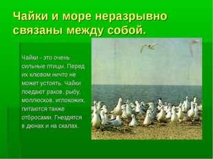 Чайки и море неразрывно связаны между собой. Чайки - это очень сильные птицы.