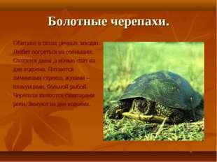 Болотные черепахи. Обитают в тихих речных заводях. Любят погреться на солнышк