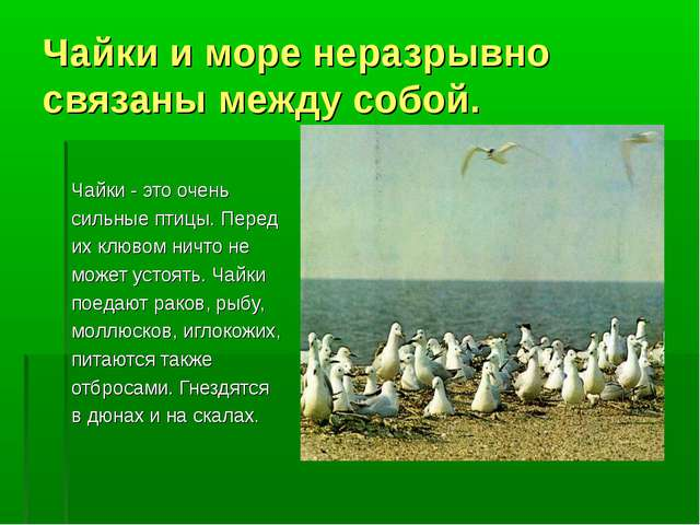 Чайки и море неразрывно связаны между собой. Чайки - это очень сильные птицы....