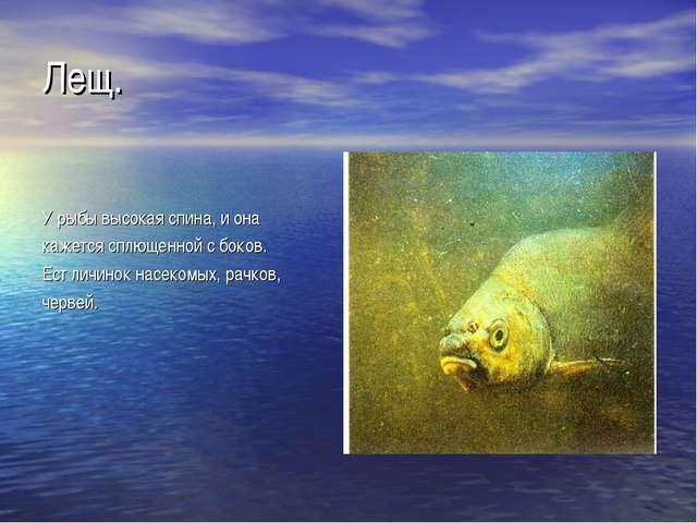 Лещ. У рыбы высокая спина, и она кажется сплющенной с боков. Ест личинок насе...