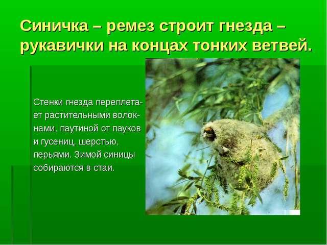 Синичка – ремез строит гнезда – рукавички на концах тонких ветвей. Стенки гне...