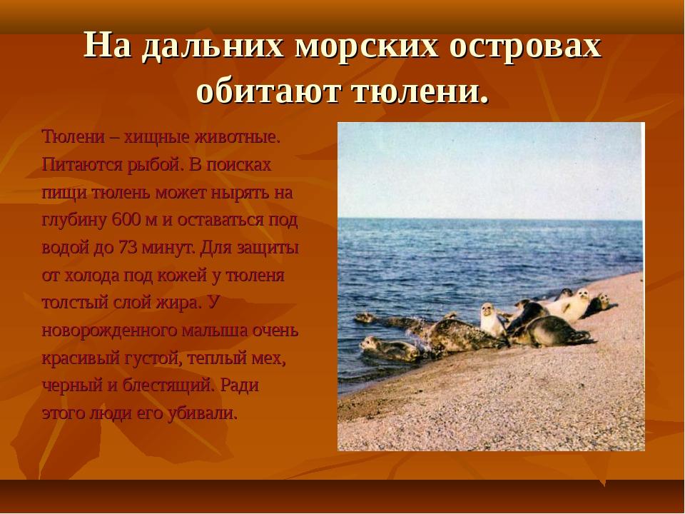 На дальних морских островах обитают тюлени. Тюлени – хищные животные. Питаютс...
