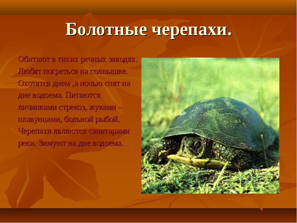 Болотные черепахи. Обитают в тихих речных заводях. Любят погреться на солнышк...