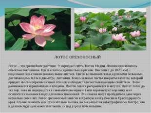 ЛОТОС ОРЕХОНОСНЫЙ Лотос – это древнейшее растение. У народов Египта, Китая,