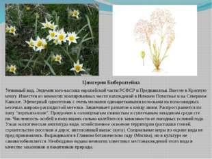 Цингерия Биберштейна Уязвимый вид. Эндемик юго-востока европейской части РСФС