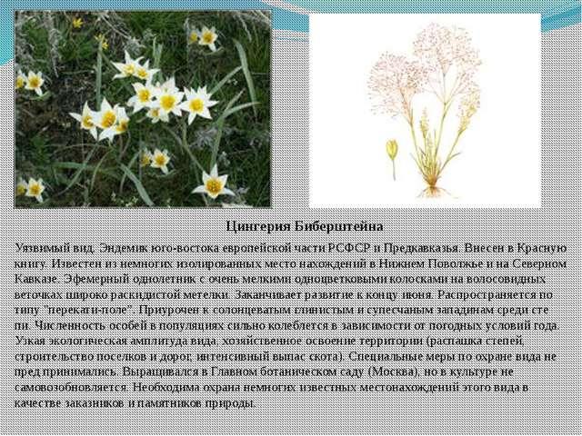 Цингерия Биберштейна Уязвимый вид. Эндемик юго-востока европейской части РСФС...
