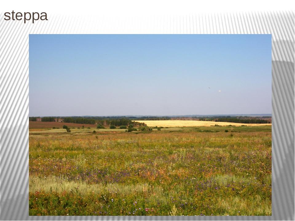 steppa Степь