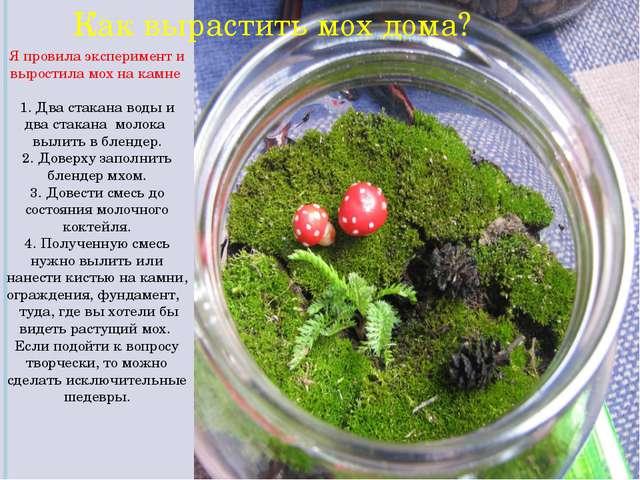 Как вырастить мох дома? Я провила эксперимент и выростила мох на камне 1. Д...