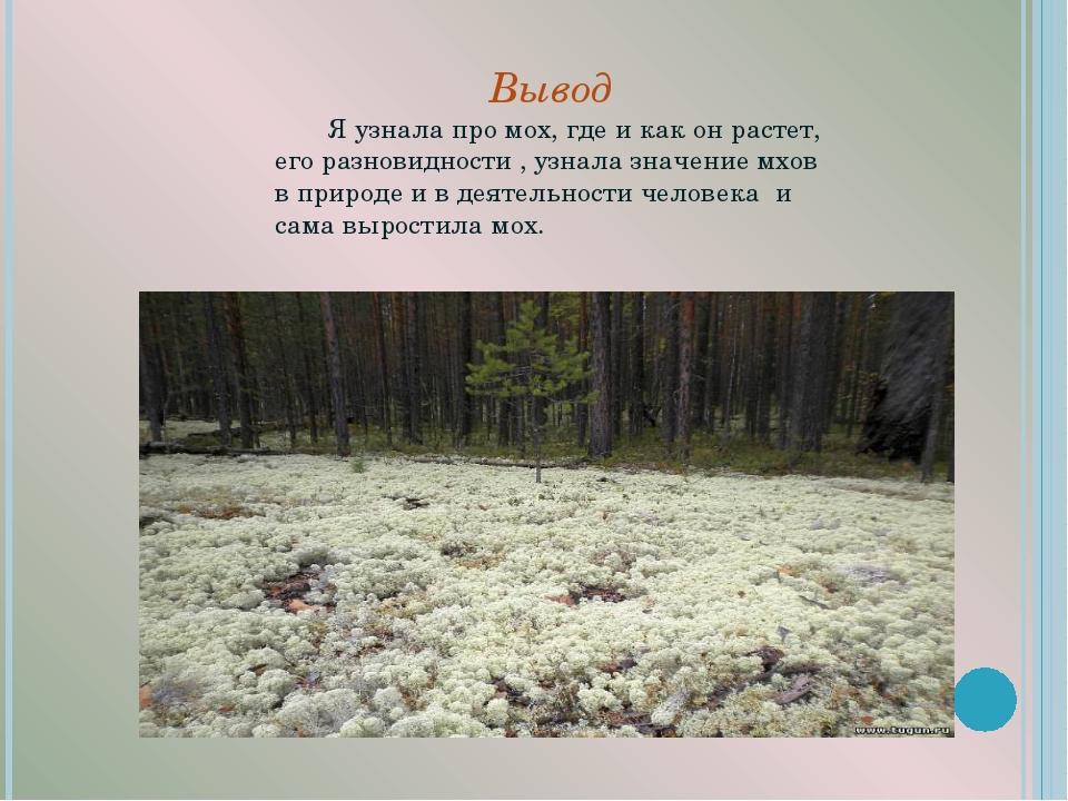Вывод Я узнала про мох, где и как он растет, его разновидности , узнала...