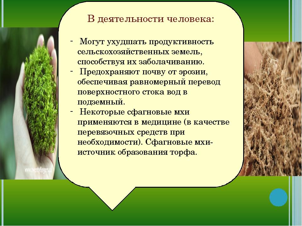 В деятельности человека: Могут ухудшать продуктивность сельскохозяйственных з...