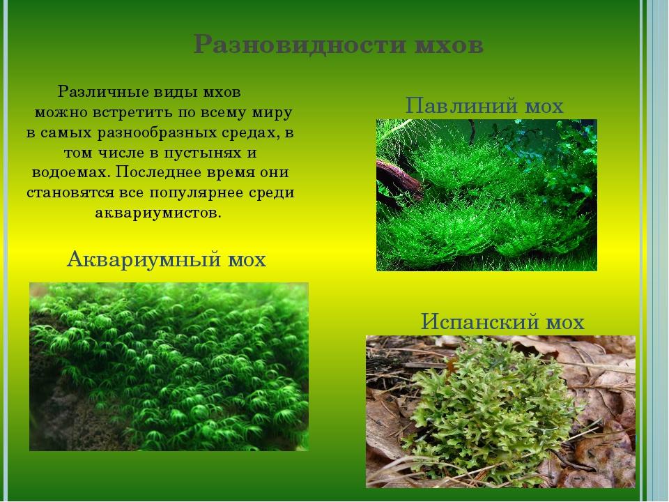 Разновидности мхов Различные виды мхов можно встретить по всему миру в самых...