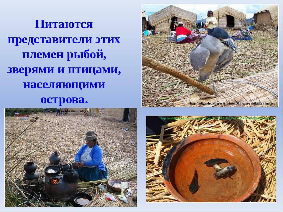 Питаются представители этих племен рыбой, зверями и птицами, населяющими остр...
