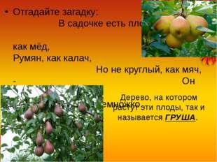 Отгадайте загадку: В садочке есть плод, Он сладок, как мёд, Румян, как калач,