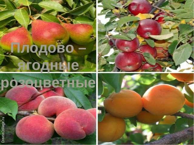 Плодово – ягодные розоцветные