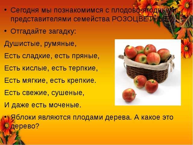 Сегодня мы познакомимся с плодово-ягодными представителями семейства РОЗОЦВЕТ...