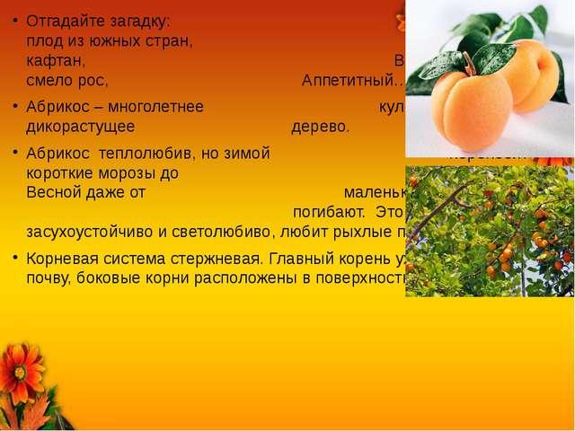 Отгадайте загадку: Сочный плод из южных стран, Светло-золотой кафтан, Всем на...