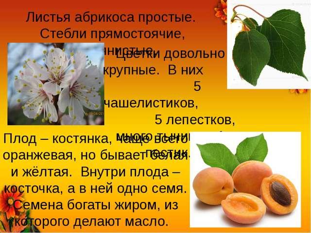 Листья абрикоса простые. Стебли прямостоячие, деревянистые. Цветки довольно к...