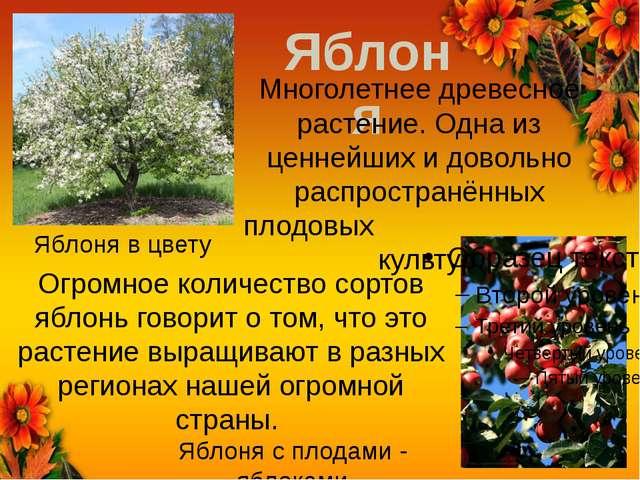 Яблоня Яблоня в цвету Яблоня с плодами - яблоками Многолетнее древесное расте...