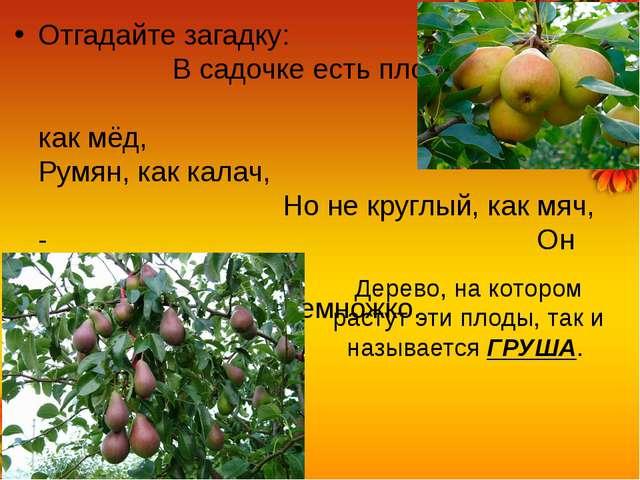 Отгадайте загадку: В садочке есть плод, Он сладок, как мёд, Румян, как калач,...