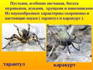 Пустыня, особенно песчаная, богата муравьями, жуками, хрущами и навозниками.