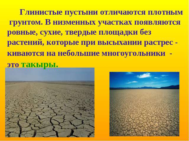 Глинистые пустыни отличаются плотным грунтом. В низменных участках появляютс...