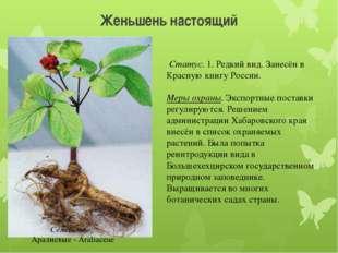 Женьшень настоящий Статус. 1. Редкий вид. Занесён в Красную книгу России. Ме