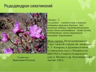 Рододендрон сихотинский Статус. 2. Его родина – Сихотэ-Алинь и морское побере