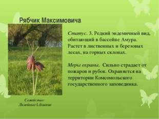 Рябчик Максимовича Статус. 3. Редкий эндемичный вид, обитающий в бассейне Аму