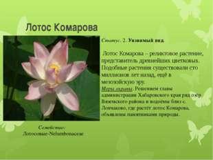 Лотос Комарова Статус. 2. Уязвимый вид. Лотос Комарова – реликтовое растение,