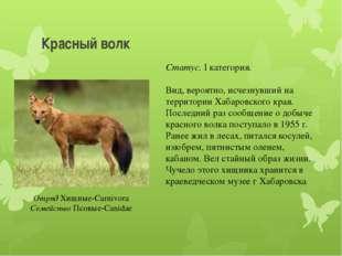 Красный волк Отряд Хищные-Carnivora Семейство Псовые-Canidae Статус. I катего