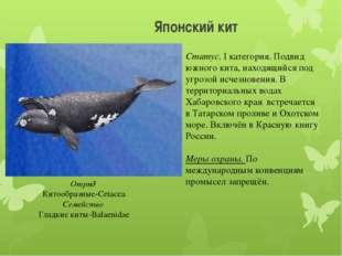 Японский кит Отряд Китообразные-Cetacea Семейство Гладкие киты-Balaenidae Ста
