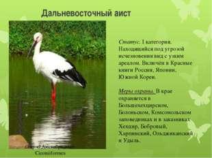 Дальневосточный аист Отряд Аистобразные-Ciconiiformes Статус. I категория. На
