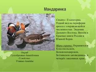 Мандаринка Отряд Гусеобразные-Anseriformes Семейство Утиные-Anatidae Статус.