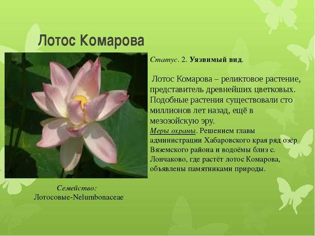 Лотос Комарова Статус. 2. Уязвимый вид. Лотос Комарова – реликтовое растение,...