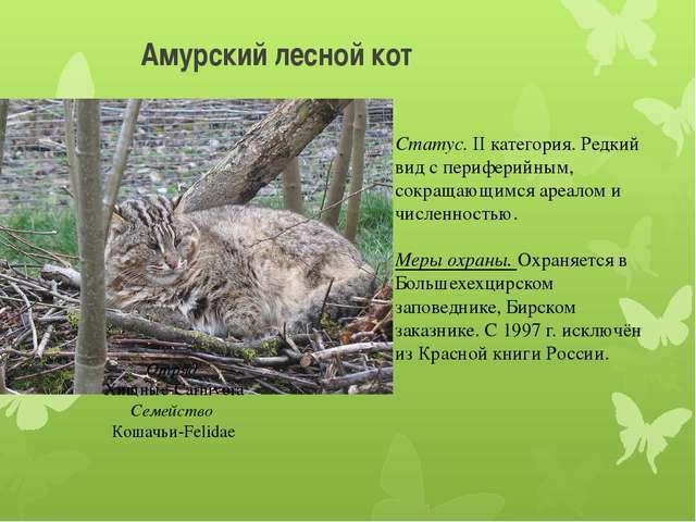 Амурский лесной кот Отряд Хищные-Carnivora Семейство Кошачьи-Felidae Статус....