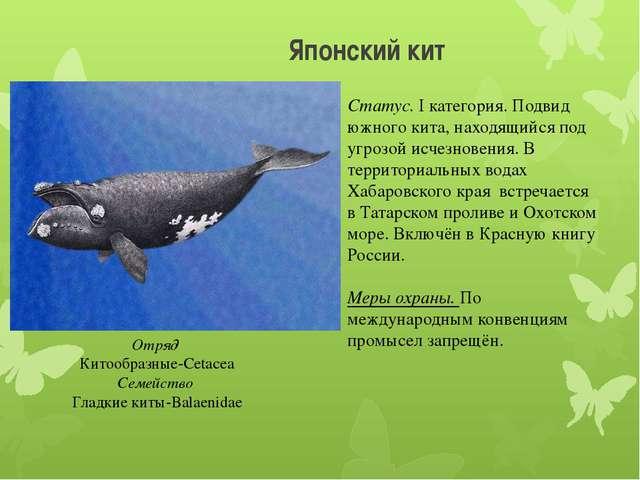 Японский кит Отряд Китообразные-Cetacea Семейство Гладкие киты-Balaenidae Ста...