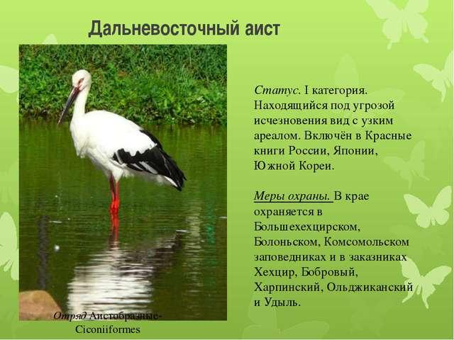 Дальневосточный аист Отряд Аистобразные-Ciconiiformes Статус. I категория. На...