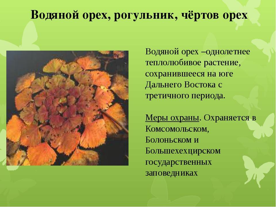 Водяной орех, рогульник, чёртов орех Водяной орех –однолетнее теплолюбивое ра...