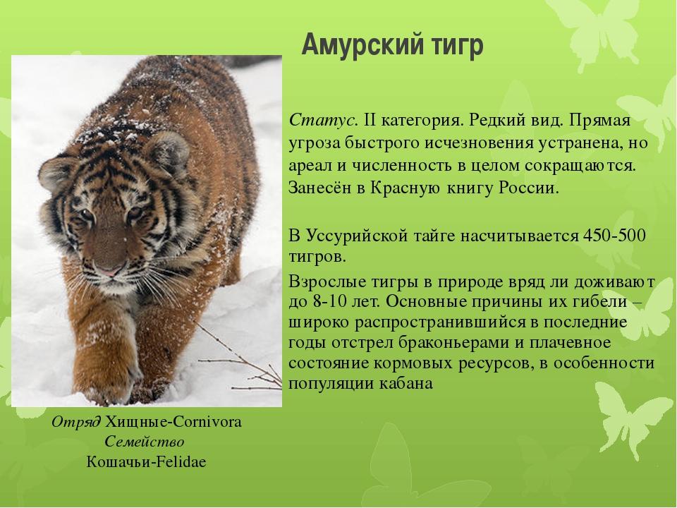 Амурский тигр Отряд Хищные-Cornivora Семейство Кошачьи-Felidae Статус. II кат...