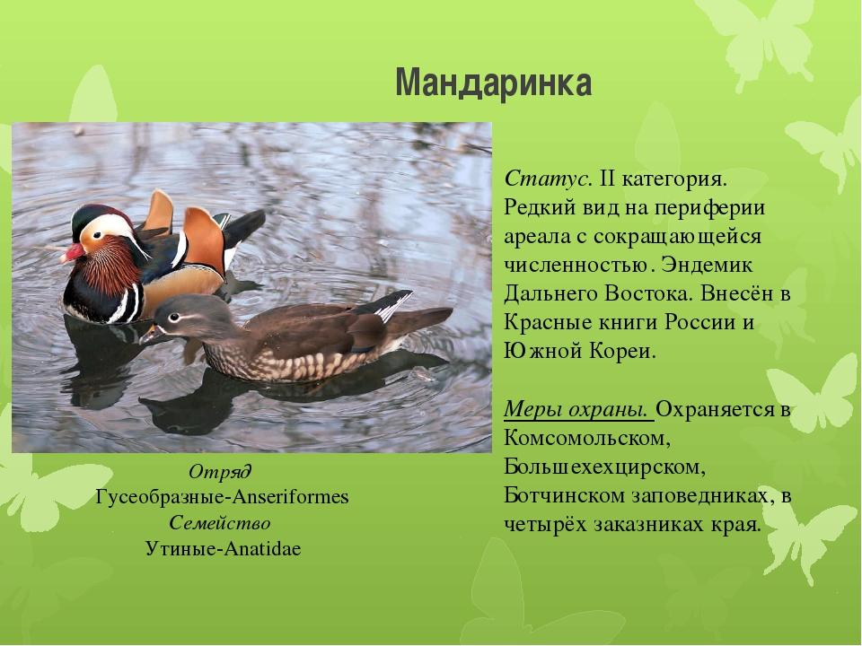 Мандаринка Отряд Гусеобразные-Anseriformes Семейство Утиные-Anatidae Статус....