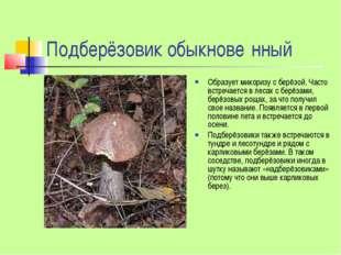 Подберёзовик обыкнове́нный Образует микоризу с берёзой. Часто встречается в л