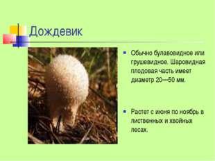 Дождевик Обычно булавовидное или грушевидное. Шаровидная плодовая часть имеет