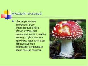 МУХОМОР КРАСНЫЙ Мухомор красный относится к роду мухоморовых грибов, растет в
