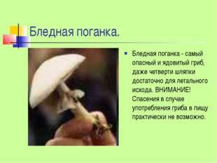Бледная поганка. Бледная поганка - самый опасный и ядовитый гриб, даже четвер