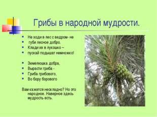 Грибы в народной мудрости. Не ходи в лес с ведром- не губи лесное добро. Кла
