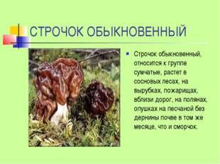 СТРОЧОК ОБЫКНОВЕННЫЙ Строчок обыкновенный, относится к группе сумчатые, расте