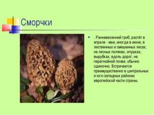 Сморчки . Ранневесенний гриб, растёт в апреле - мае, иногда в июне, в листвен