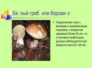 Бе́лый гриб или борови́к Предпочитает леса с моховым и лишайниковым покровом,