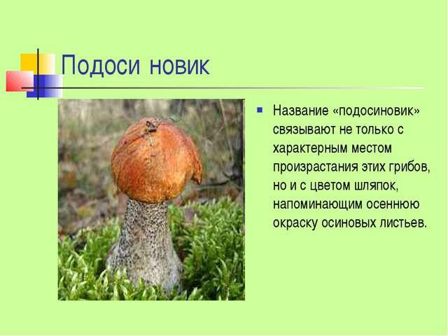 Подоси́новик Название «подосиновик» связывают не только с характерным местом...